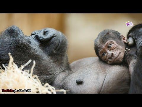 شاهد أفضل 10 آباء في عالم الحيوان أروع أمثلة التضحية