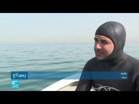 محاولات جمعية فري دايف لإنقاذ الثروة البحرية في لبنان