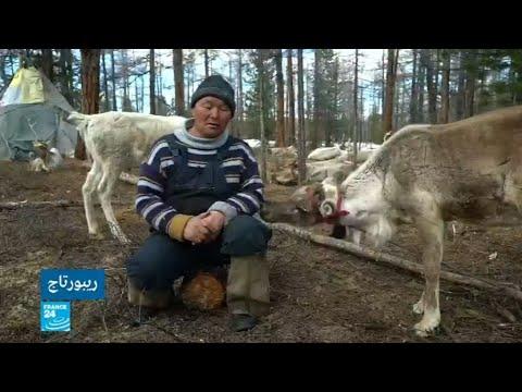 شاهد رعاة الرنة على الحدود الروسية المنغولية ينفصلون عن الحداثة