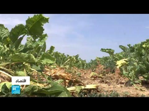 شاهدموجة حر وجفاف تهدد نشاط المزارعين في ألمانيا