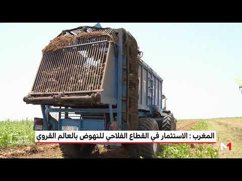 استراتيجية زراعية للنهوض بالعالم القروي في المغرب