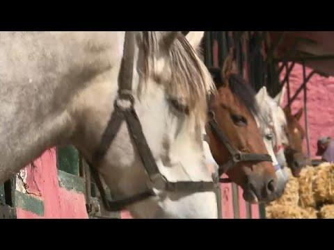 تربية الخيول تحتضر في الجزائر  وتحتاج إلى معجزة كي تعود
