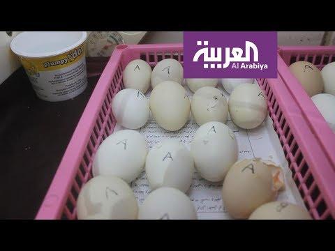 شاهد تناول قشر البيض لعظام قوية
