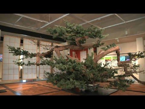 شاهد حدائق اليابان المسحورة في معرض بكين الدولي