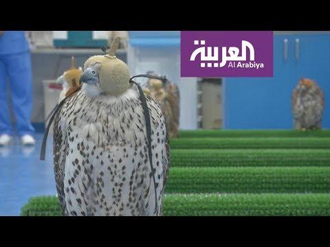 افتتاح أكبر مستشفى لعلاج الصقور في أبوظبي
