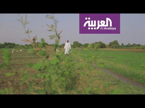 سفينة المساعدات السعودية  الإماراتية إلى السودان شكَّلت انفراجة على الموسم الزراعي