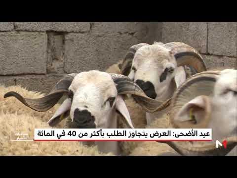 شاهد العرض يتجاوز الطلب على الماشية بأكثر من 40 في المغرب