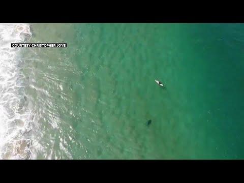 شاهد تنبيهات من طائرة بدون طيار تنقذ سبّاحًا من هجمة قرش وشيكة