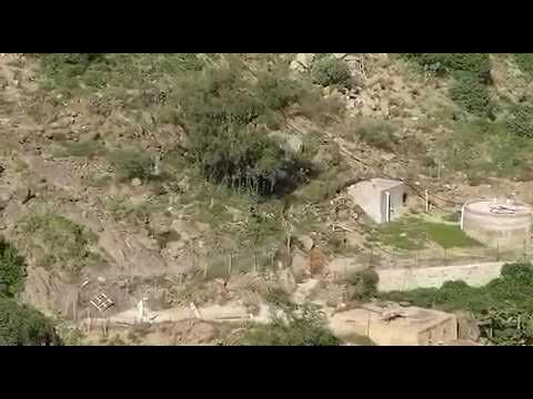 شاهد قرود البابون تهاجم المنازل والمزارع في فيفاء