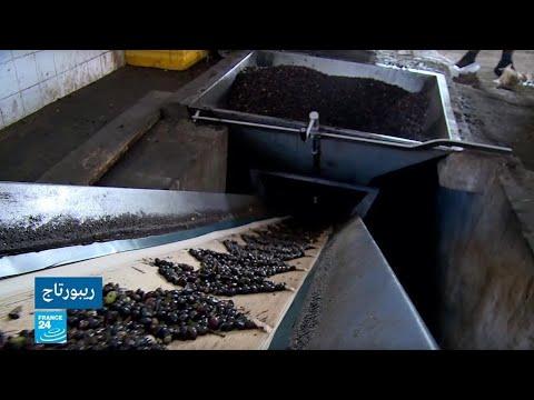 شاهد منظمة فاو تكشف أن ليبيا تحتل المرتبة 11 عالميا في إنتاج الزيتون