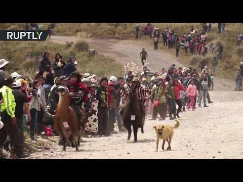 شاهد سباق الخيل من دون أحصنة في الإكوادور