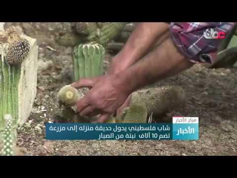 شاهد فلسطيني يحول حديقة منزله إلى مزرعة تضم 10 آلاف نبتة صبّار
