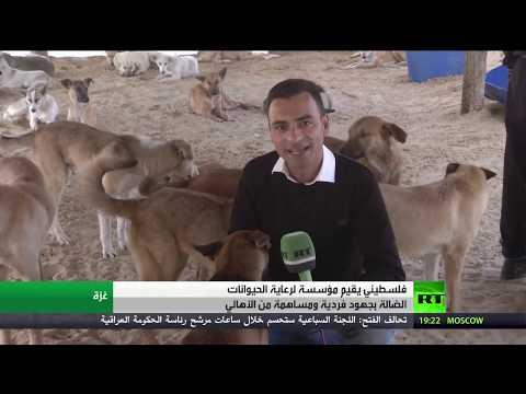 شاهد مؤسسة سلالة بغزة لرعاية الحيوانات الضالة