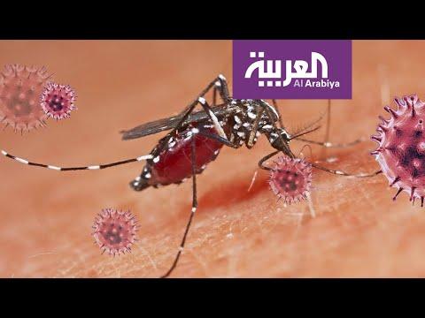 شاهد هل تنقل الحشرات كورونا للإنسان