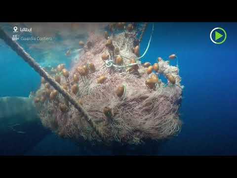 شاهد حوت بطول 10 أمتار يعلق في شبكة صيد ويطفو على سطح الماء