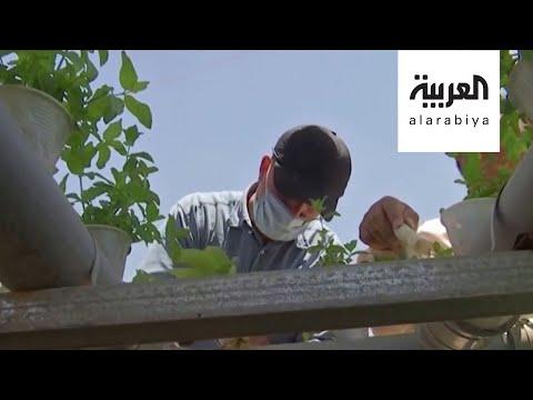 شاهد اللاجئون السوريون يزرعون الخضروات في مخيم الزعتري