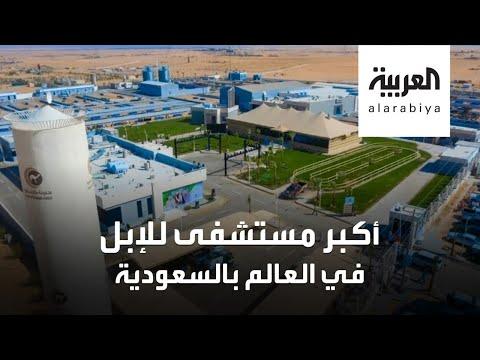 شاهد افتتاح أكبر مستشفى حول العالم للإبل في السعودية