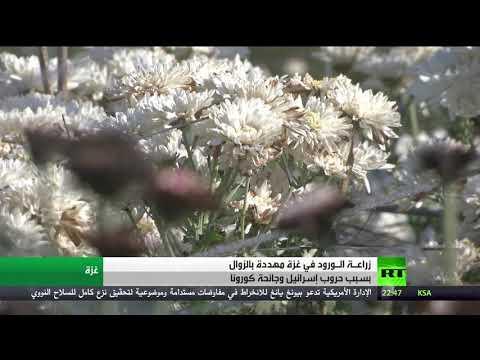 شاهد زراعة الورد في غزة تحتضر بسبب الحصار وتفشي فيروس كورونا