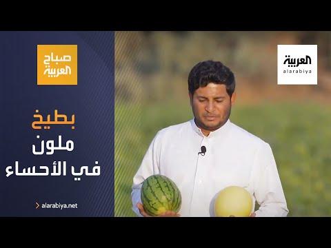 شاهد سعودي ينجح بزراعة بطيخ ملون في الأحساء